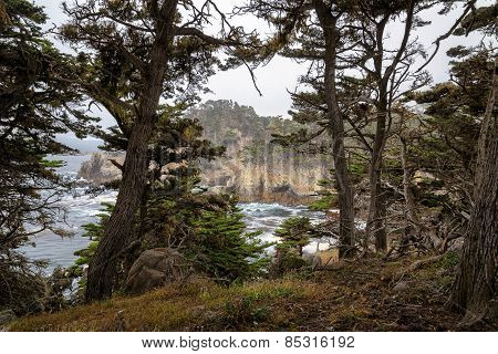 California Coast, the trees in Point Lobos State Natural Reserve