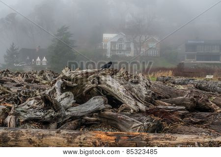 Lone Bird Sitting On Driftwood