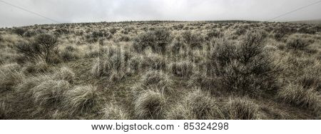 Sagebrush and Bunchgrass