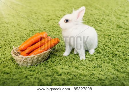 Funny rabbit with a carrots