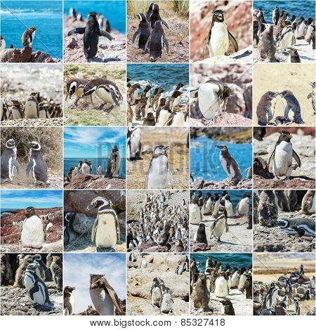 Penguins life in Patagonia