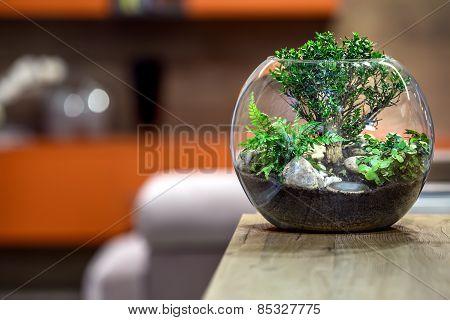 Green plant close