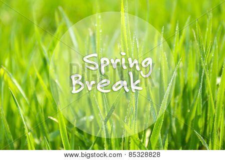Spring break concept. Green grass outdoors
