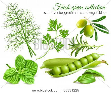 Fresh green collection of herbs and vegetables. Vector illustration