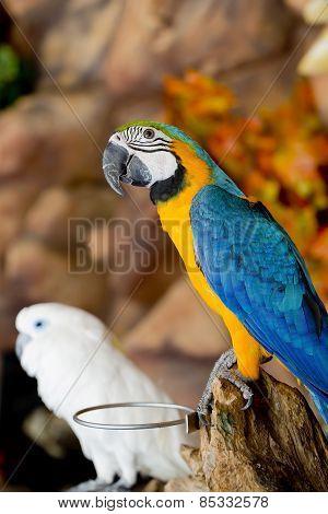 Couple Macaws Sitting On Log.