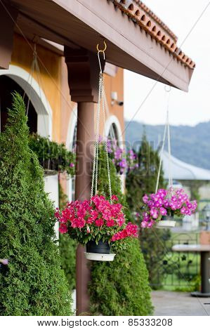 Hanging Baskets Of Flowers At The Front Porch. Landsc