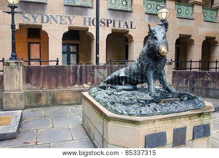 A Statue Of A Wild Pork Before Sydney Hospial