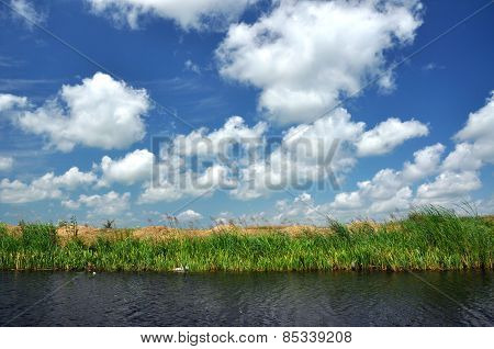 Waterline In The Danube Delta, Romania