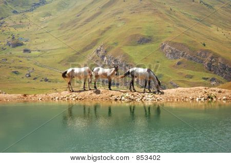 Three Horses At The Lake With Reflection In The Water