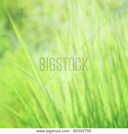 Blur green grass background, fine art, soft focus, beautiful fresh field on sunny day, beauty of spring nature