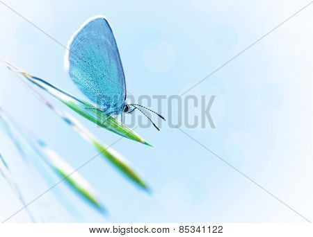 Beautiful butterfly with blue wings outdoors over blue clear sky, pretty insect on fresh plant outdoors in spring time