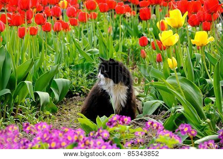 Cat sits in the garden