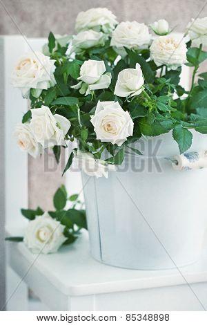 Beautiful white roses.