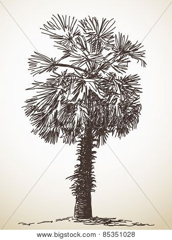 Palm tree sketch. Isolated. Hand drawn illustration