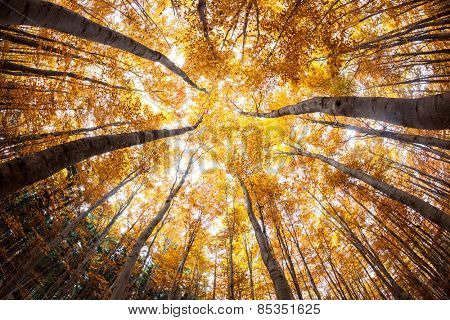 autumn forest treetops (intentionally distorted image; shot with a fisheye lens)