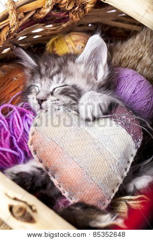 sleeps kitten and heart pillow
