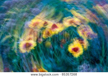 Long Exposure Abstraction Of Flowers