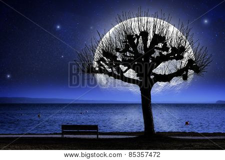 Lake, Tree And Oversized Moon