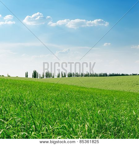 green grass field and blue sky over it