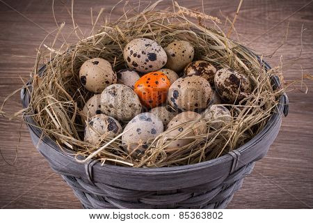 Wood Basket Filled With Eggs And One Orange Egg Of Quails On Wooden Background