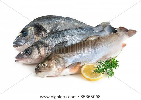 Assorted fresh seafood isolated on white background