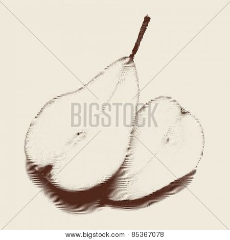 Vector engraved style one color illustration, two halves of pear