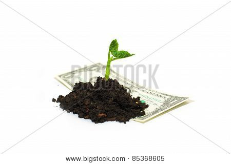 The Plant Grows From A Pile Of Soil And Banknote On A White Background