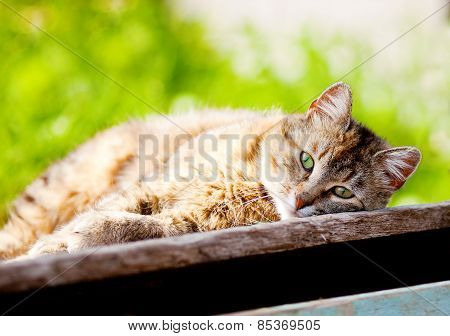 Young Cat Basking In The Sun