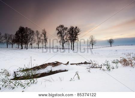 Winter Field Sunset