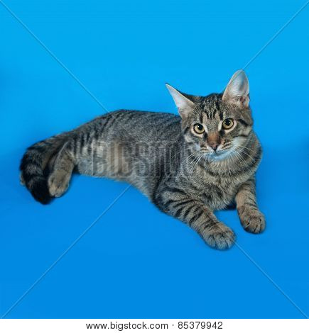 Tabby Kitten With Yellow Eyes Lying On Blue