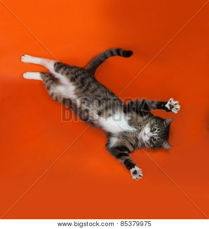 White And Striped Spotted Cat Lies On Orange