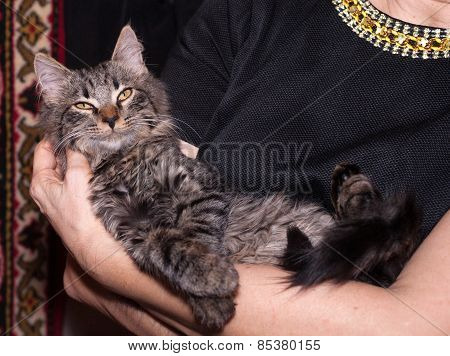 Fluffy Siberian Kitten Lying On Hand