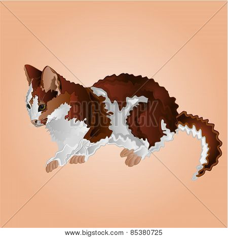 May Tabby Kitten Vector