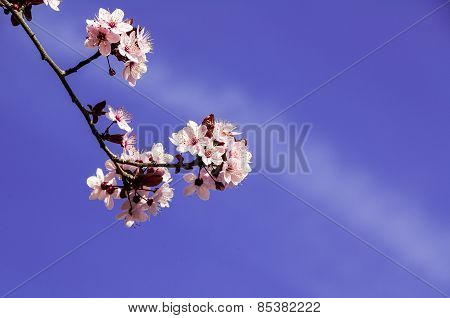 white flower on blue sky