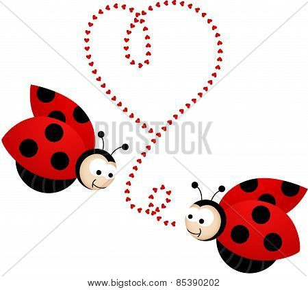 Two cute ladybirds in love