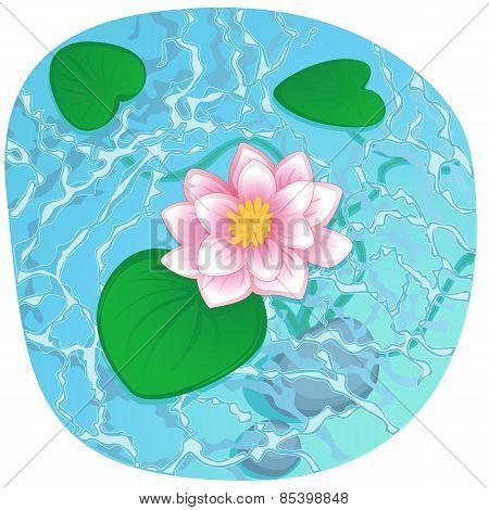 blooming lotus on shining water