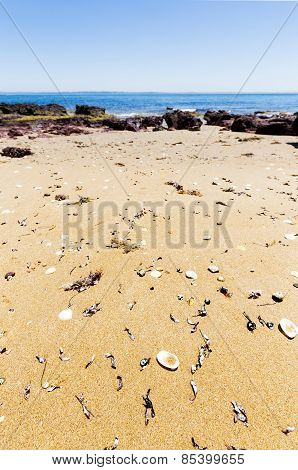 Shells on the sand, Red Rocks Beach, Phillip Island, Victoria, Australia