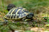 stock photo of green turtle  - photo of the young turtles from the wild nature - JPG