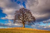 picture of gallows  - Gallows Hill  - JPG