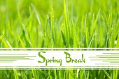 foto of spring break  - Spring break concept - JPG