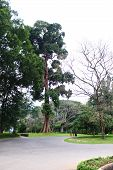 image of royal botanic gardens  - Royal Botanical Gardens Peredanie - JPG