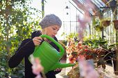 image of small-flower  - Portrait of florists woman working with flowers in a greenhouse holding a watering can in her hand. Small business owner.