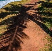 stock photo of orange-tree  - Palm tree leaves cast shadow on an orange textured sand - JPG
