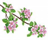 foto of apple blossom  - Apple tree branch with pink blossom and green leaves - JPG
