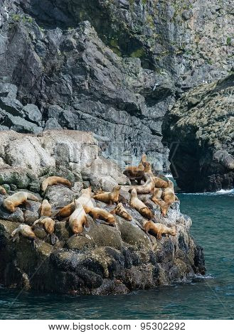 Stellar Sea Lion Rookery