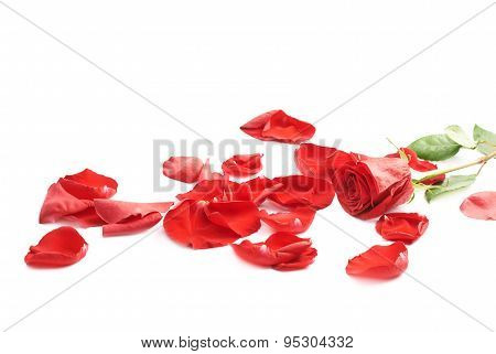 Red rose composition