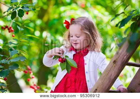 Little Girl Picking Fresh Cherry Berry In The Garden