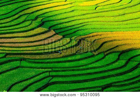 Colorful terraced rice field in rice season in Mucangchai, Vietnam