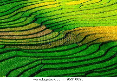 Colorful terraced rice field in rice season in Mucangchai, Vietnam