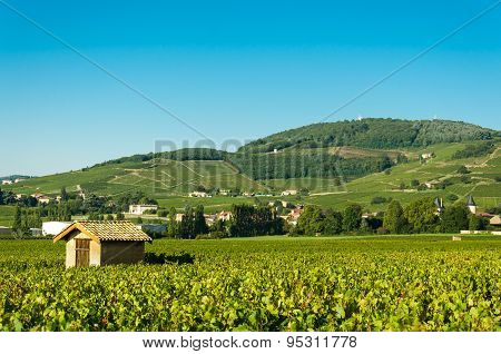 Vineyards and hill of brouilly, Beaujolais, France